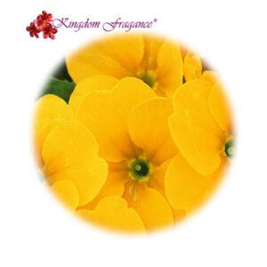 Flor Amarilla Concentrado