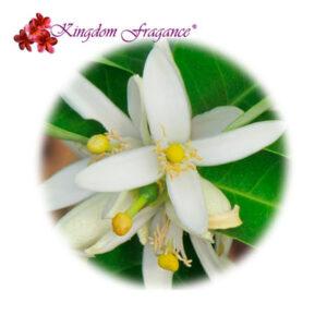Flor de Limón Concentrado