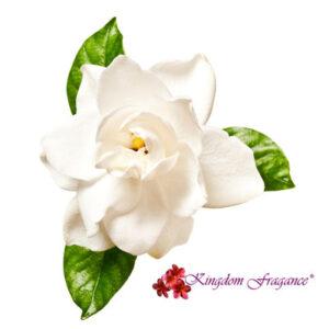 Gardenia Concentrado