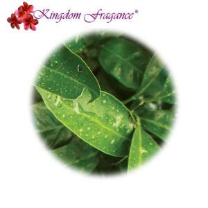 Aceite Esencial Petitgrain Paraguay